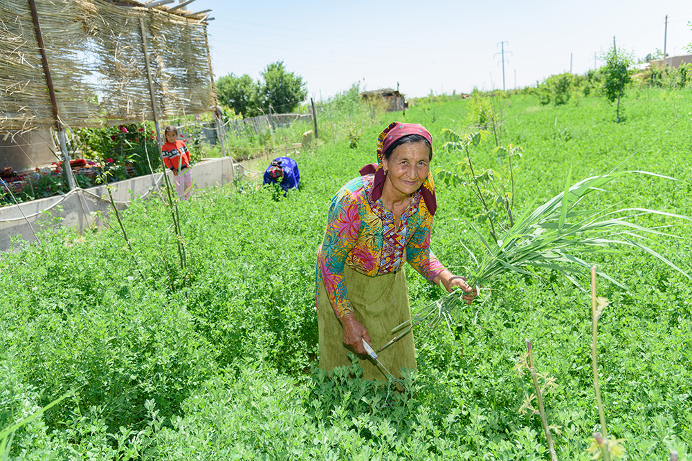 Self-grown community leaders champion alternative financing